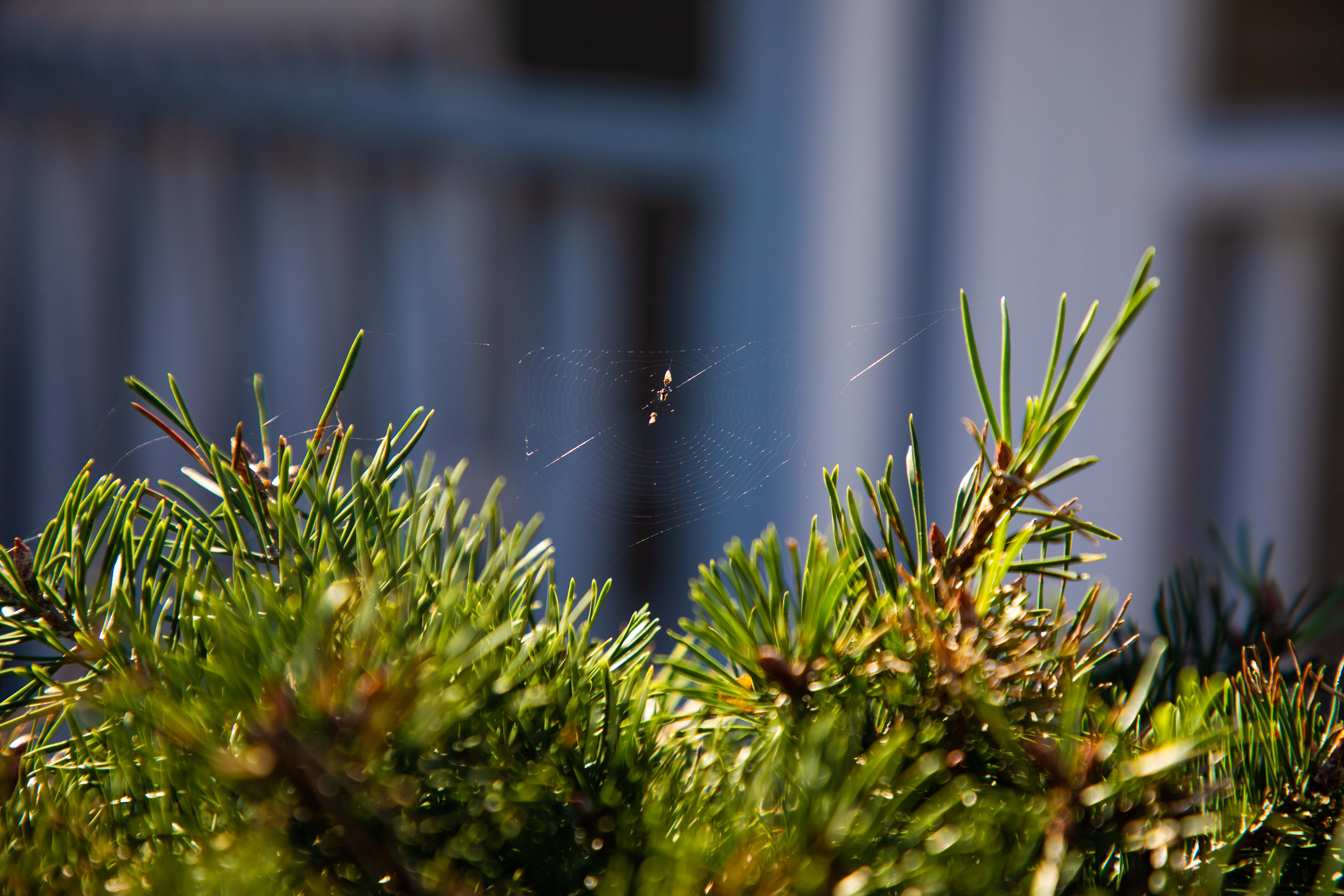 Cobweb of Creation