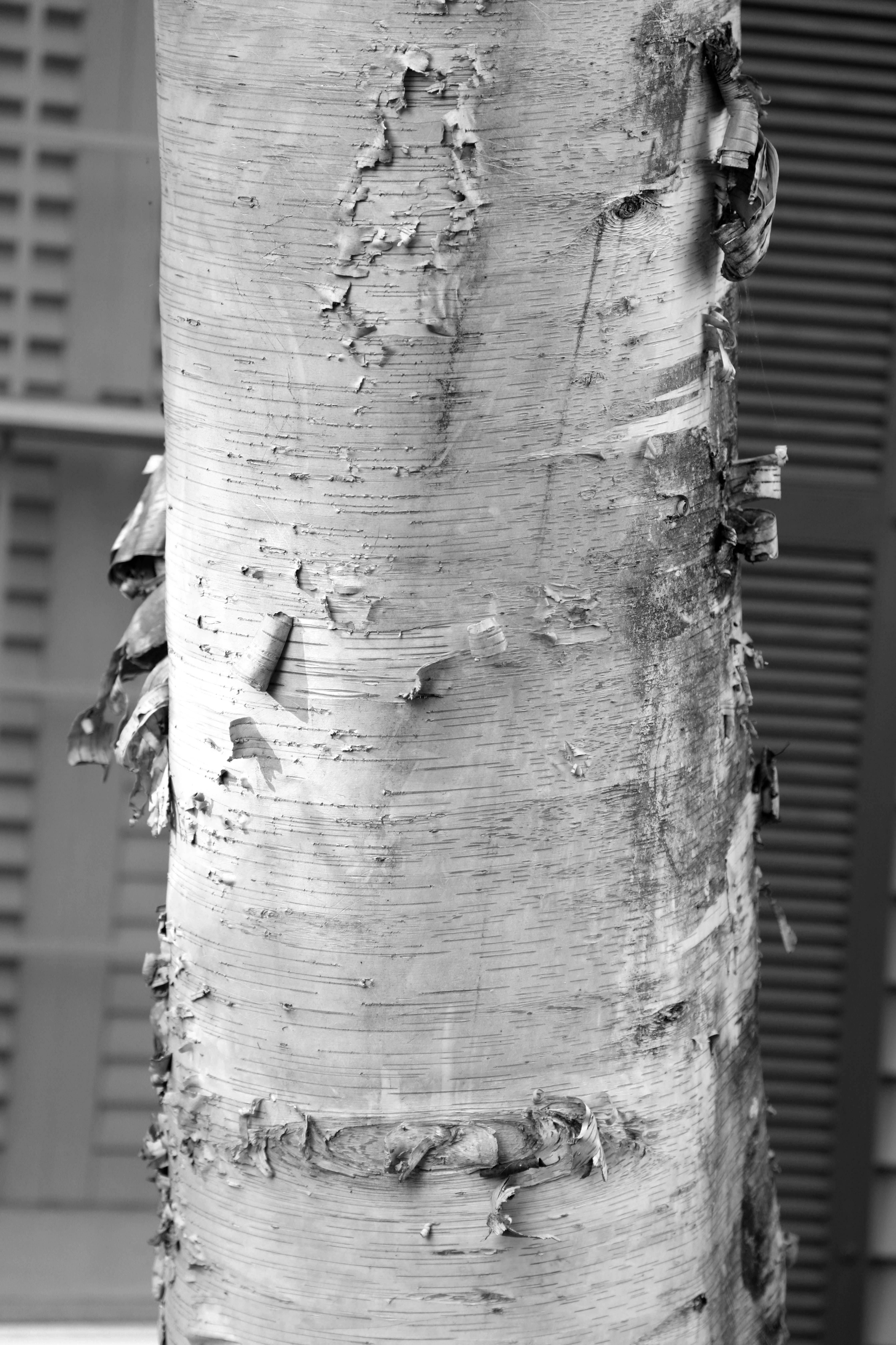 Treemendous Details B&W